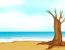 A tree without leaves at the seashore Stock Images