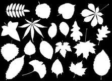Tree leaves set,. Silhouettes leaf Stock Photos