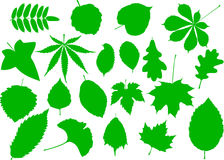 Tree leaves set,. Silhouettes leaf Royalty Free Stock Photography