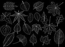 Tree leaves set, Royalty Free Stock Images