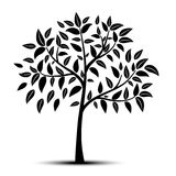 Tree with leaves  Stock Image