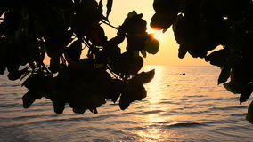 Tree leaves silhouette against sunset. Detail of tree leaves silhouette against tropical beach on sunset stock footage