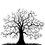 Tree without leaves silhouette Royalty Free Stock Image