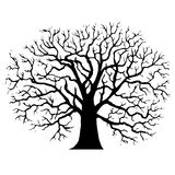Tree without leaves silhouette Stock Images