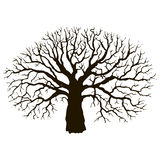 Tree without leaves silhouette Royalty Free Stock Photos