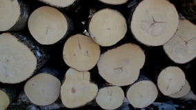 Tree leaves swaying to the breeze of the air and logs piled stock video footage