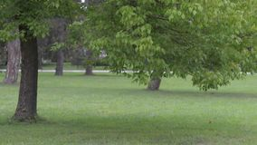 Tree with leaves swaying in the wind stock footage