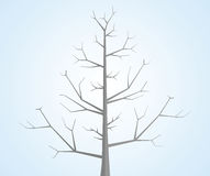 Tree without leaves. Royalty Free Stock Photos