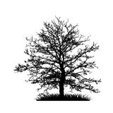 Tree without Leaves Vector Illustration, EPS 10. Royalty Free Stock Image