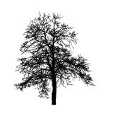 Tree without Leaves Vector Illustration, EPS 10. Stock Images