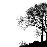 Tree without Leaves Vector Illustration, EPS 10. Stock Image