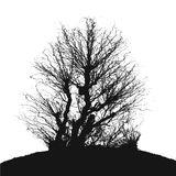 Tree without Leaves Vector Illustration, EPS 10. Royalty Free Stock Photography