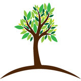 Tree. With leaves on white background Royalty Free Stock Photography