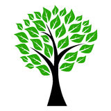 Tree with leaves Royalty Free Stock Images