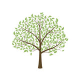 Tree. Tree with leaves on a white background.  vector illustration Stock Image
