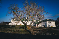 Tree without leaves with white house background Royalty Free Stock ...