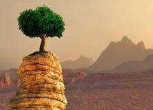 Tree on a ledge Royalty Free Stock Image