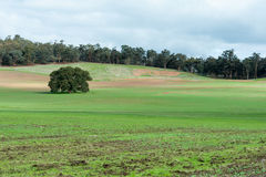 Tree on the left. Of the green field Royalty Free Stock Photo