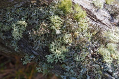 Tree with lichens Stock Photos