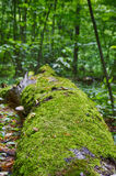 The tree lies on the ground. The moss-covered tree lying on the ground Stock Photos