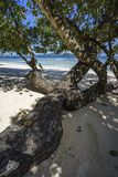 Tree lies in the white sand of the beach at anse severe, la digu Royalty Free Stock Images