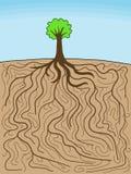 Tree of life Stock Image