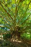 Tree of Life Stock Photography