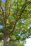 Tree of life. Picture of a big vibrant tree Stock Photos