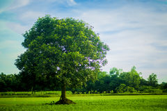 Tree Of Life. An Alone tree.nA place of shelter Stock Images