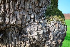 Tree of life2. Amazing nature,wood detail close up Royalty Free Stock Image