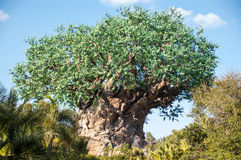 Tree of Life Animal Kingdom. The Tree of Life located in Walt Disney World's Animal Kingdom in Orlando, FL Royalty Free Stock Images