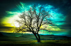 Tree of life. Backlit bald tree in the sunset Royalty Free Stock Photo