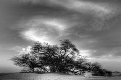 Tree of life, Bahrain, Black and white HDR Royalty Free Stock Photo