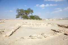 The Tree of Life in Bahrain Stock Image