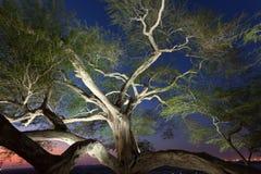 Tree of Life, Bahrain. Tree of Life illuminated at night. Kingdom of Bahrain, Middle East royalty free stock photo
