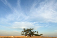 Tree of life with beautiful flaky sky, Bahrain Stock Photography