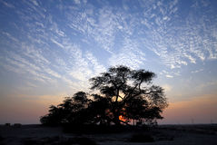 Tree of life in beautiful flaky sky, Bahrain Royalty Free Stock Photo