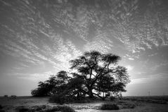 Tree of life in beautiful flaky sky, Bahrain Stock Images