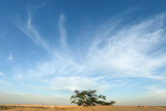 Tree of life in beautiful sky, Bahrain Royalty Free Stock Images