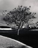 Tree of life. Black&white tree in lisbon clouds Stock Photos
