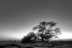 Tree of Life in blue hours, Bahrain, Black and white HDR Royalty Free Stock Photo