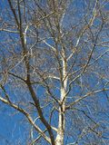 Tree of life. In a blue sky Stock Image