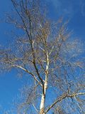 Tree of life. In a blue sky Stock Photo