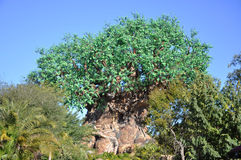 Tree of Life in Disney Animal Kingdom Royalty Free Stock Images