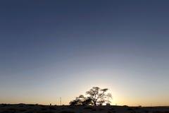 Tree of life during dusk, Bahrain Royalty Free Stock Photos