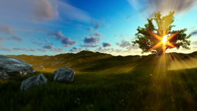Tree of life on a green meadow, beautiful sun rays. Hd video stock footage