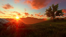 Tree of life on a green meadow, beautiful sunset stock video footage