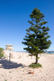 Tree and life guard tower on a beach. Australian city sandy beach Cronulla with life guard house and pine tree, Sydney, Australia Stock Photography