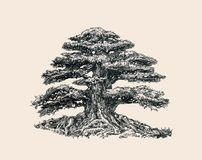 The tree of life. A hand-drawn ballpoint pen Royalty Free Stock Photography