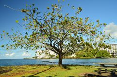 The Tree of Life In Hawaii Royalty Free Stock Images